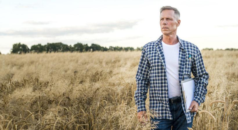 man-wheat-field-looking-away